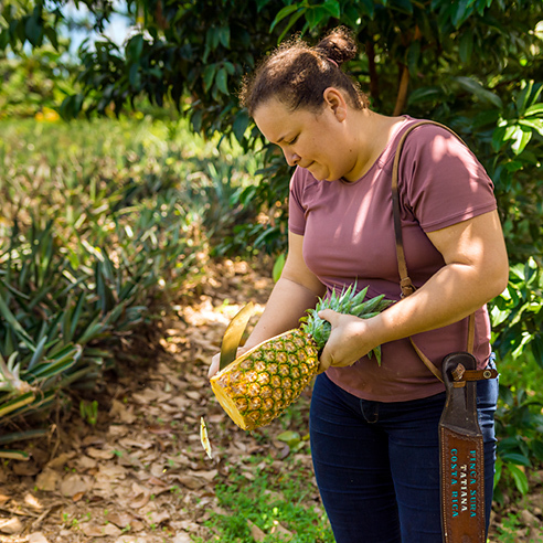 Woman Curtting Pineapple 784X784