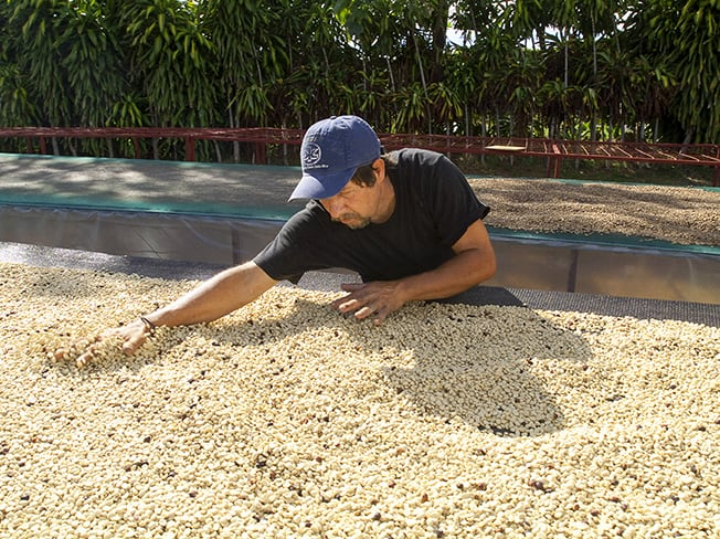Man drying coffee beans