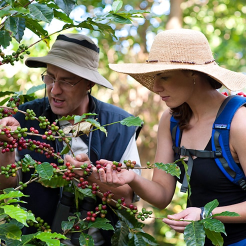 Couple examining coffee beans