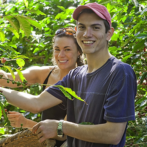 Couple picking coffee beans
