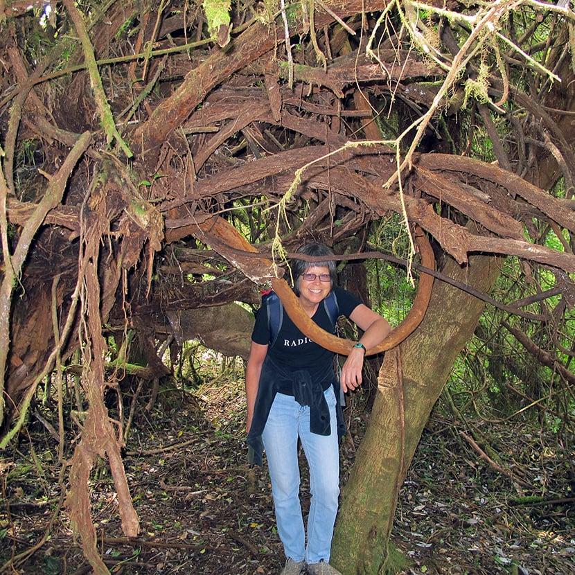 Hiker standing under tree roots