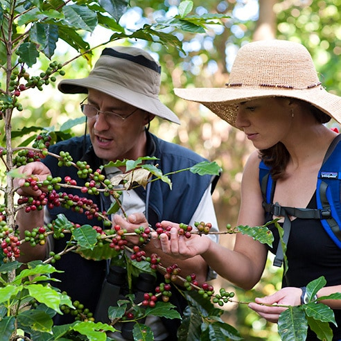 Couple looking at coffee beans
