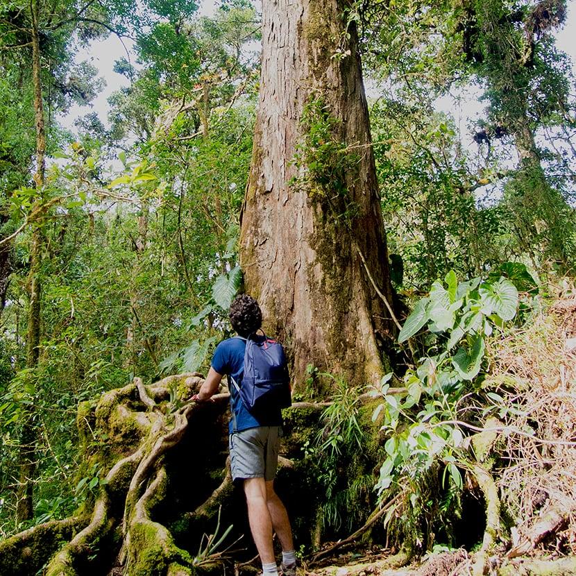 Man next to a Barva Tree