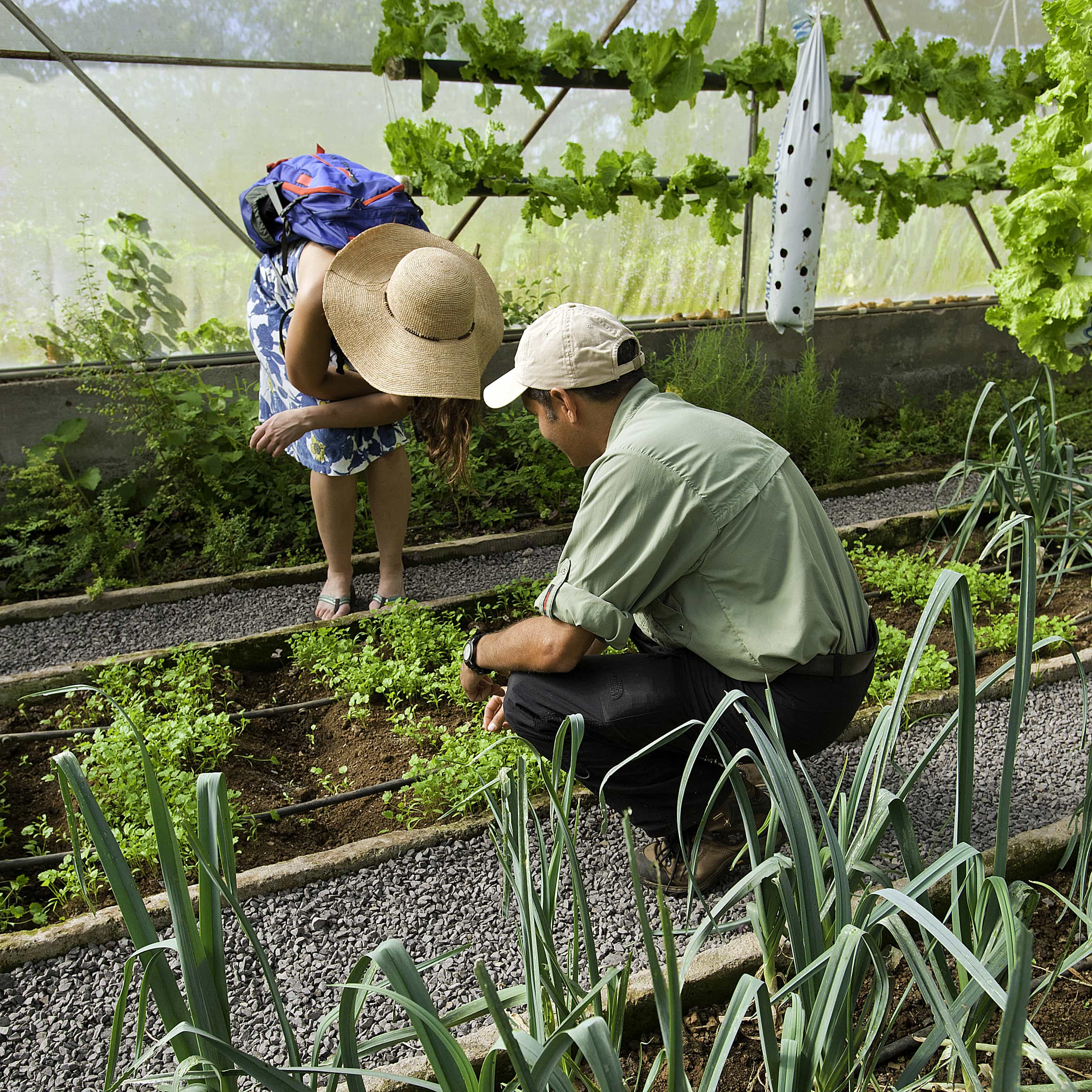 Couple looking at plants in a greenhouse