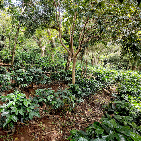 Slider Coffee Field