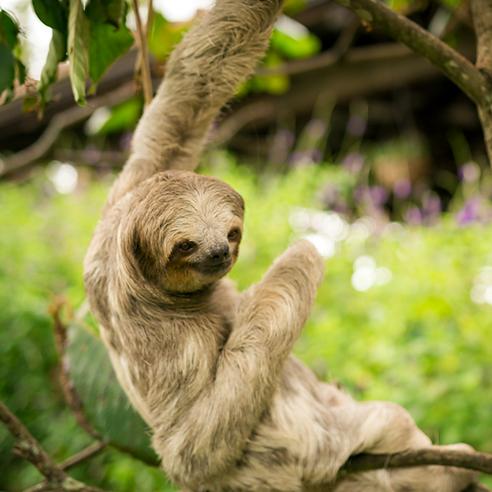 Slider Sloth