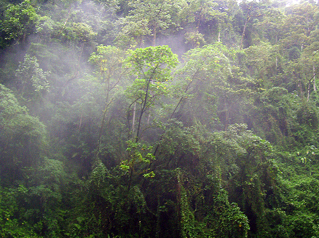 Thumb Cloud Forest Donn 652X488