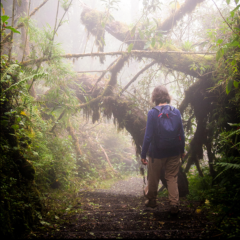 Thumb Cloud Forest Hiker