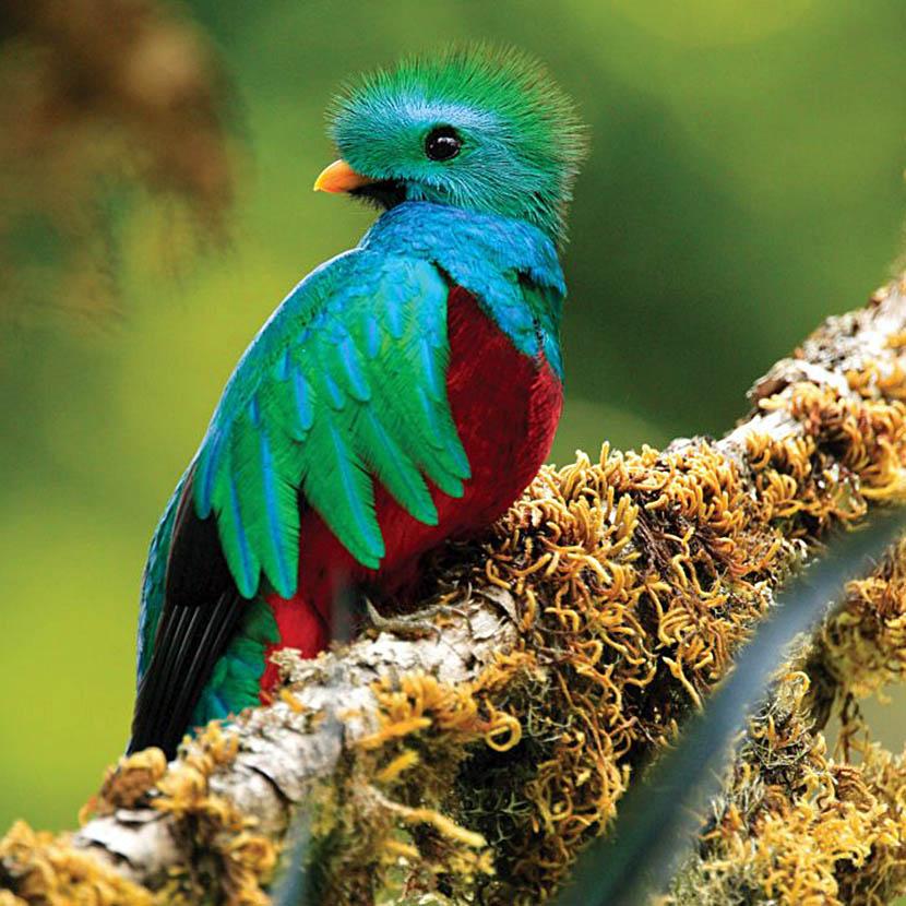 Thumb Quetzal